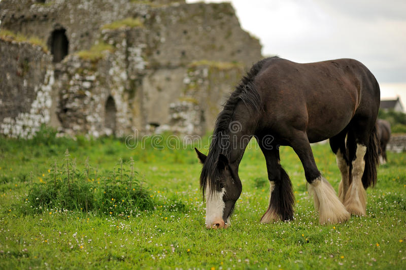 A Horse Stock Photography
