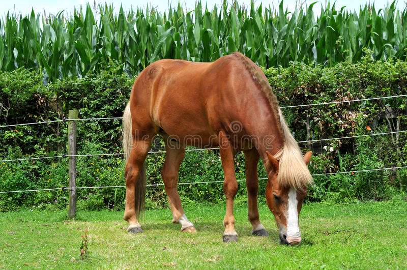 Download Horse stock image. Image of white, standing, eats, grass - 27251525