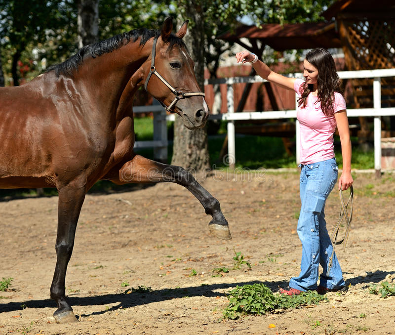 Download Horse Stock Images - Image: 27399514