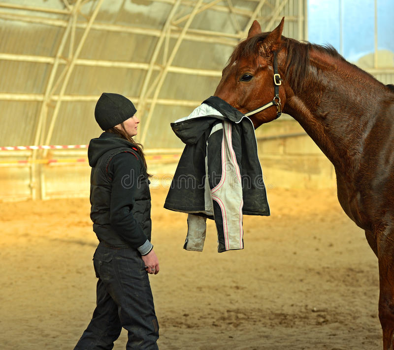 Download Horse Stock Photos - Image: 28861243