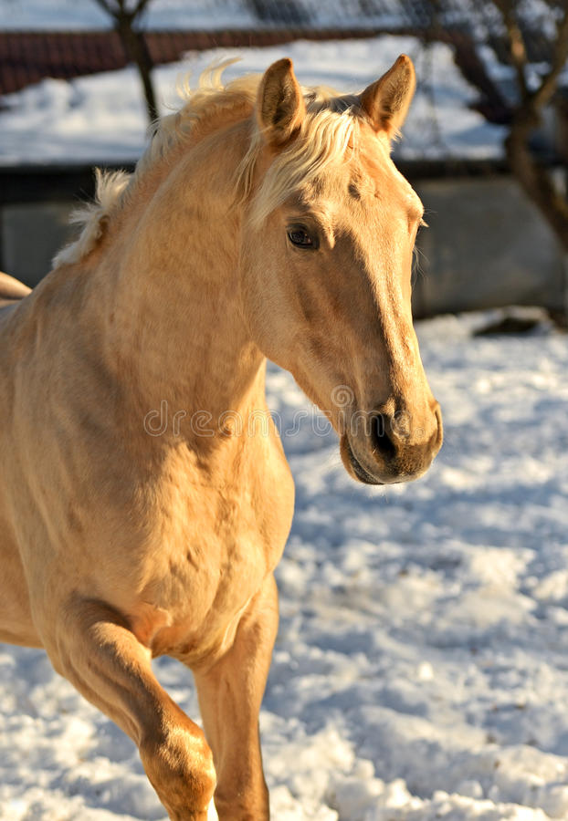 Download Horse stock photo. Image of gallop, thoroughbred, hoofed - 28861294