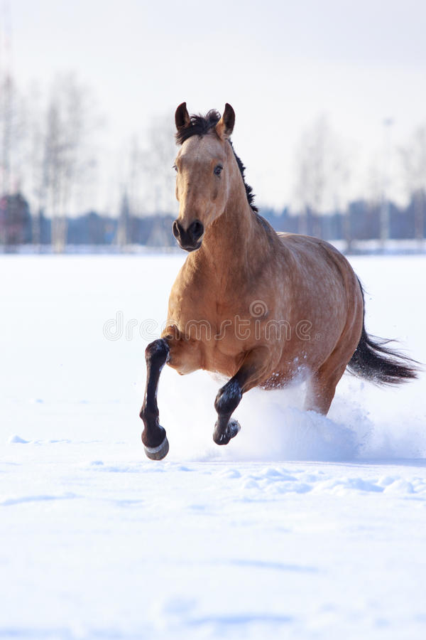 Download Horse stock image. Image of horse, nature, snout, freezing - 29380127