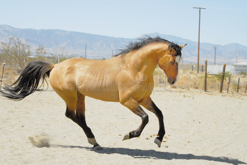 Horse-4 images stock