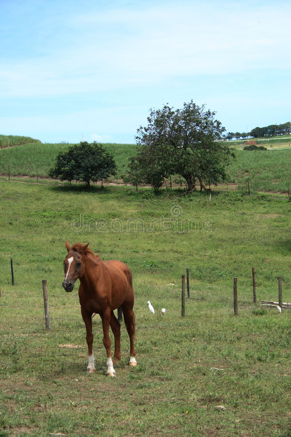 Download Horse stock photo. Image of fence, farm, dandelions, grass - 4150014