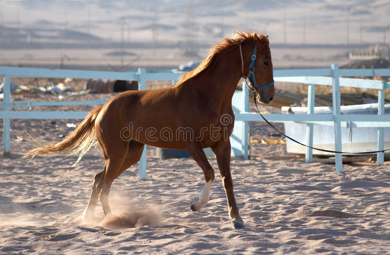 Download The horse stock image. Image of beauty, gallop, play, beautiful - 4318903