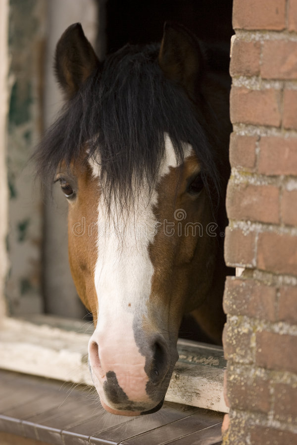 Download Horse stock photo. Image of running, derby, riding, outdoors - 4976000