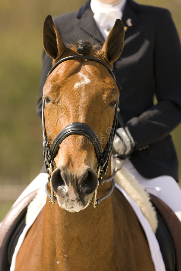 Download Horse stock image. Image of course, derby, eventing, action - 4976269