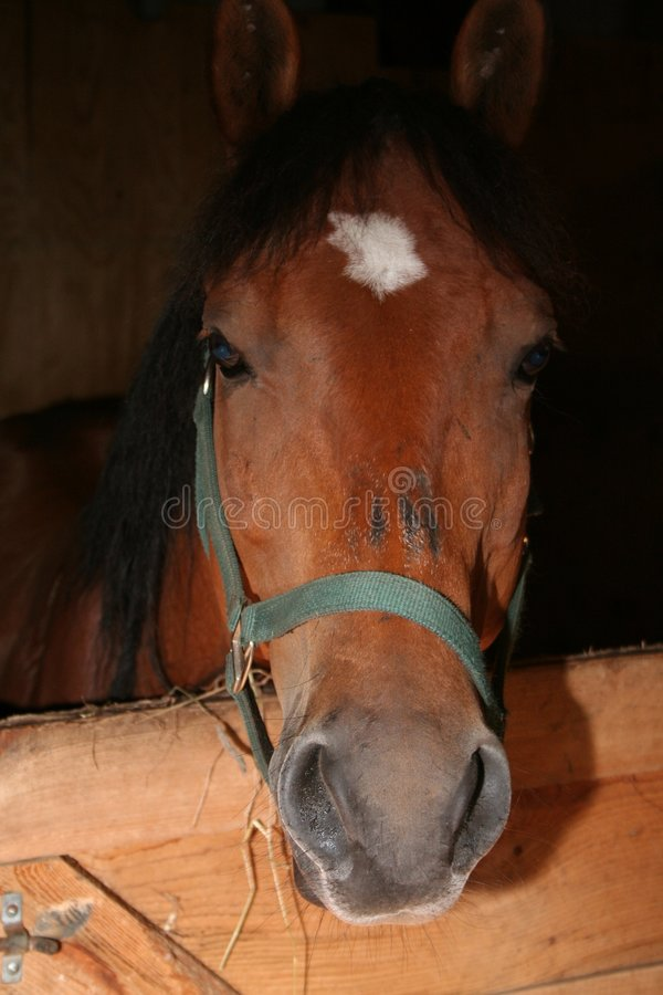 Download Horse stock image. Image of mare, stall, stallion, barn - 5931625