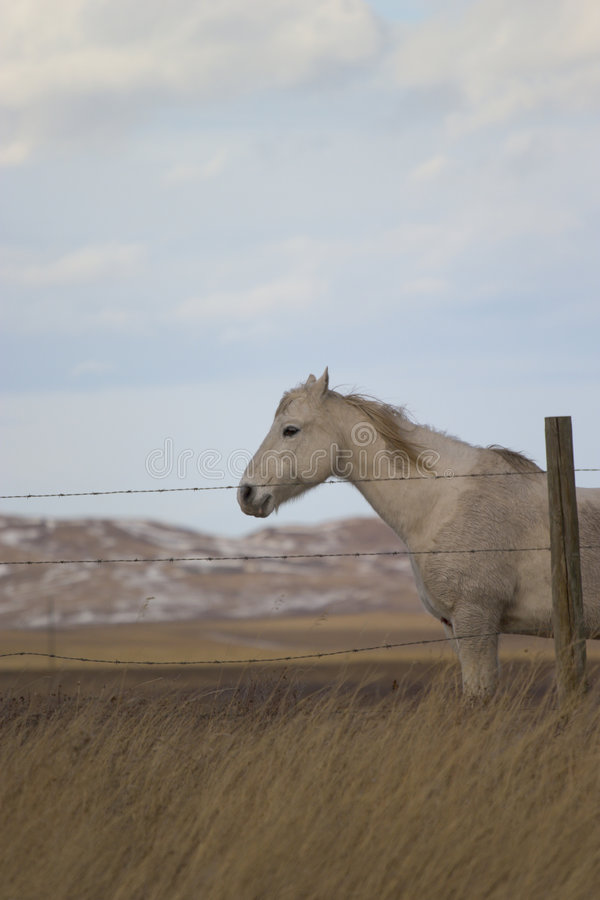 Download Horse 6 stock photo. Image of barn, pets, barbwire, livestock - 118694