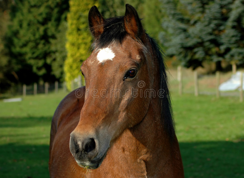 Horse 6 Stock Photography