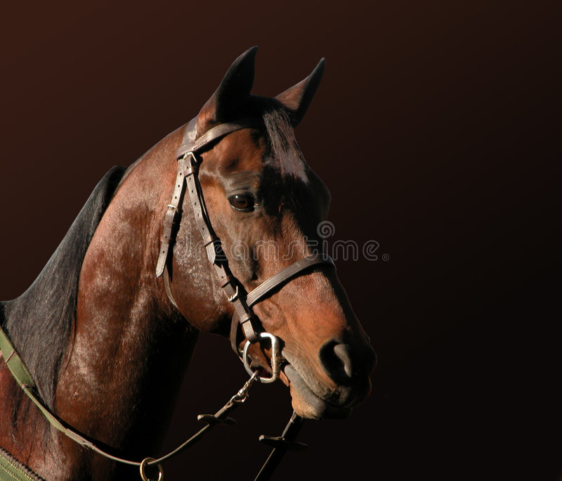 Download Horse stock photo. Image of straps, cheek, snaffle, brow - 6282190