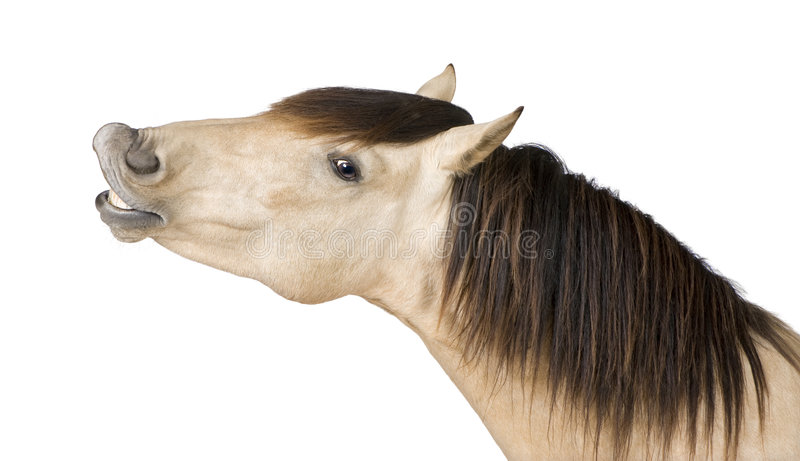 Download Horse stock photo. Image of thoroughbred, farm, cattle - 7510904