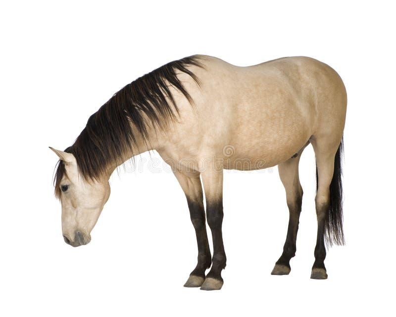 Download Horse stock photo. Image of livestock, view, nobody, shot - 7644920