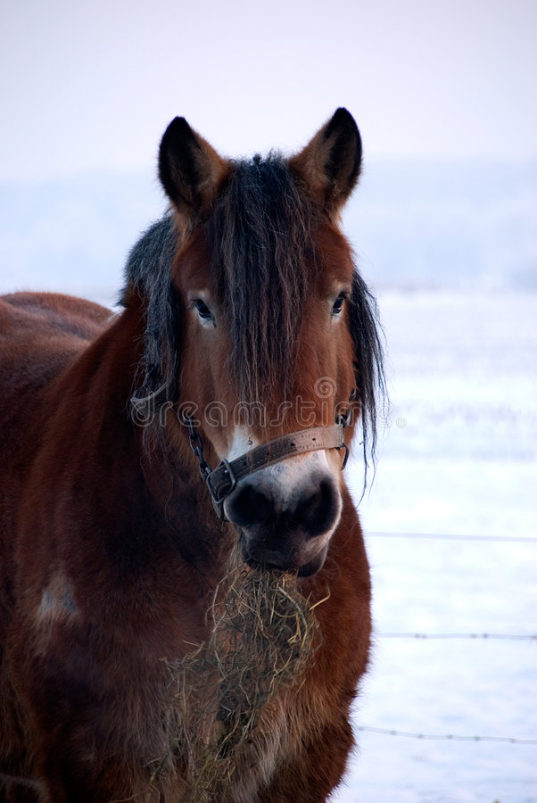 Download Horse stock image. Image of eats, pony, outdoors, face - 7713135