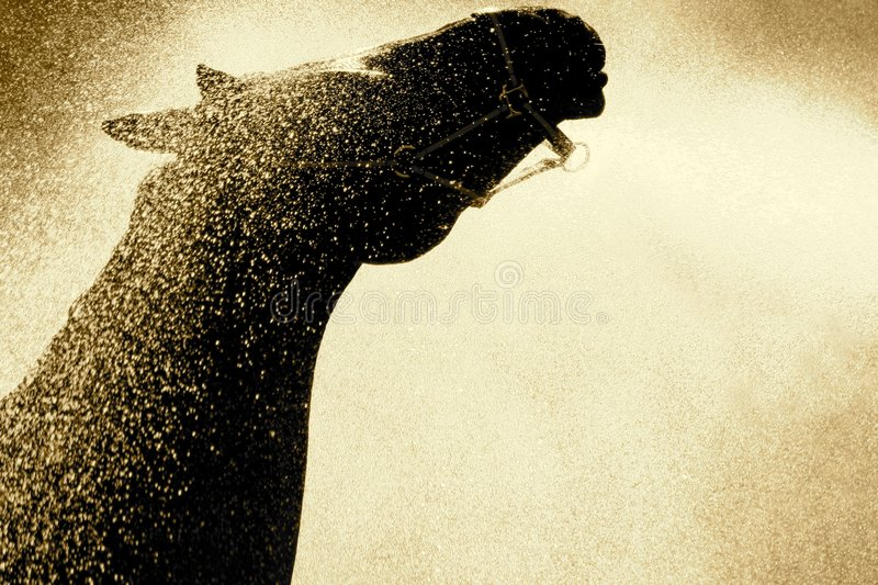 Horse. A beautiful stallion being sprayed down for a bath. picture in sepia royalty free stock images
