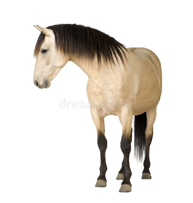 Download Horse Stock Images - Image: 8717904