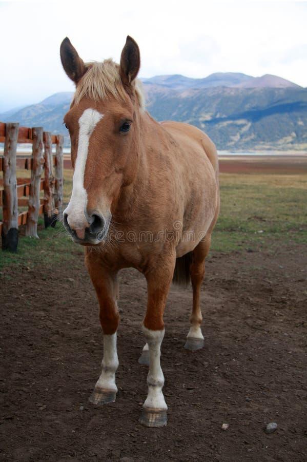 Download Horse stock image. Image of mammal, field, livestock, barnyard - 8718585