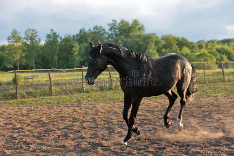 Download Horse stock photo. Image of animal, horse, stud, stable - 9585722