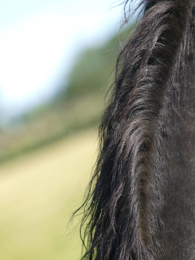 Download Horse Abstract stock image. Image of equine, beauty, black - 28962197
