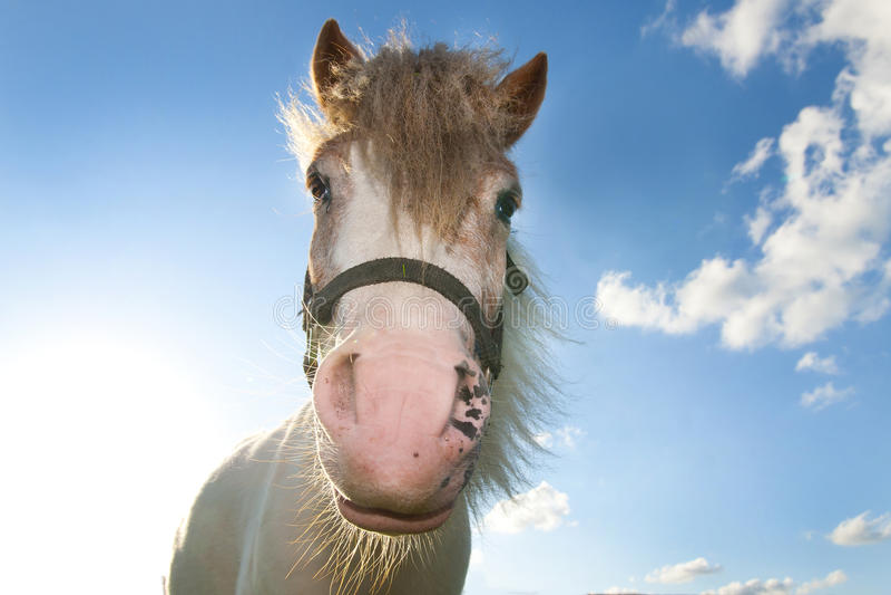 Horse Against Blue Sky Stock Photography