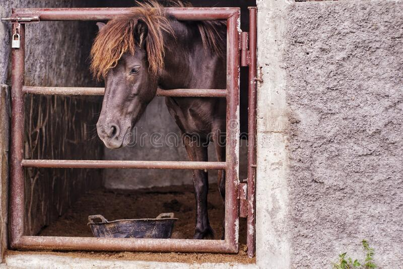 A horse alone in its cage royalty free stock image