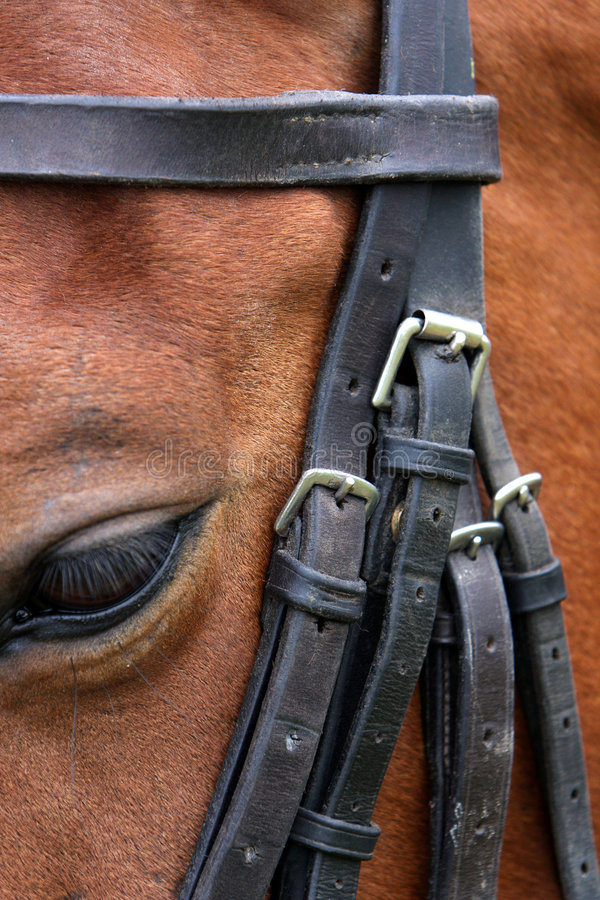 Free Horse And Bridle Stock Images - 5540964