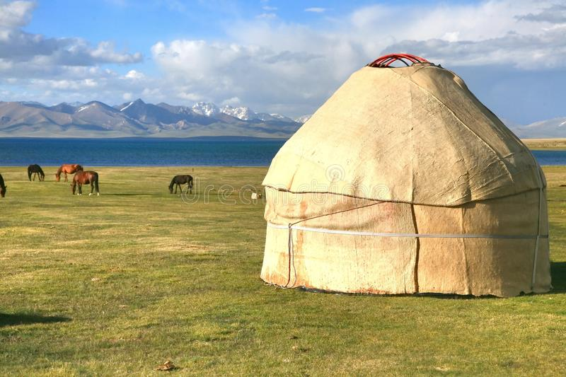 The horse around ger camp in a large meadow at Song kul lake , Naryn of Kyrgyzstan. Horse around ger camp in a large meadow at Song kul lake , Naryn of stock photo