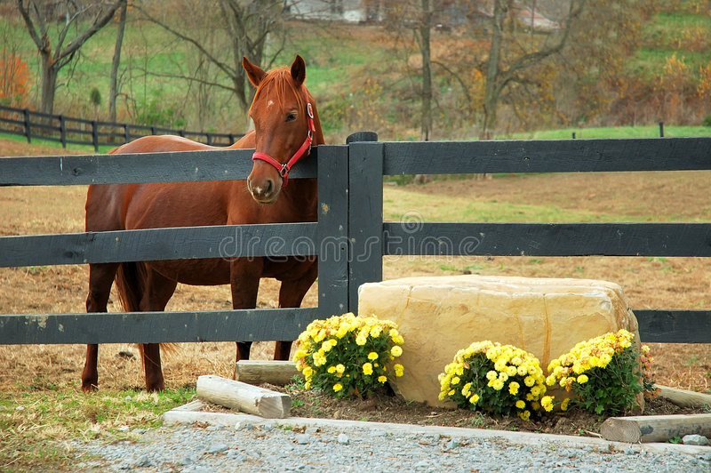 Horse in the Autumn royalty free stock photo
