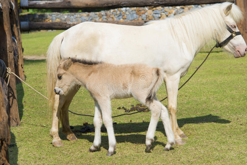 Horse and baby horse. A meadow in farm royalty free stock photo
