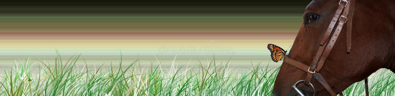 horse banner royalty free stock photo