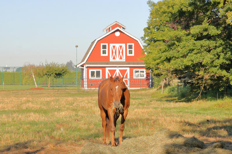 Horse and Barn royalty free stock photo