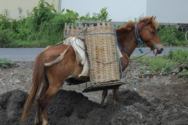 Horse and basket
