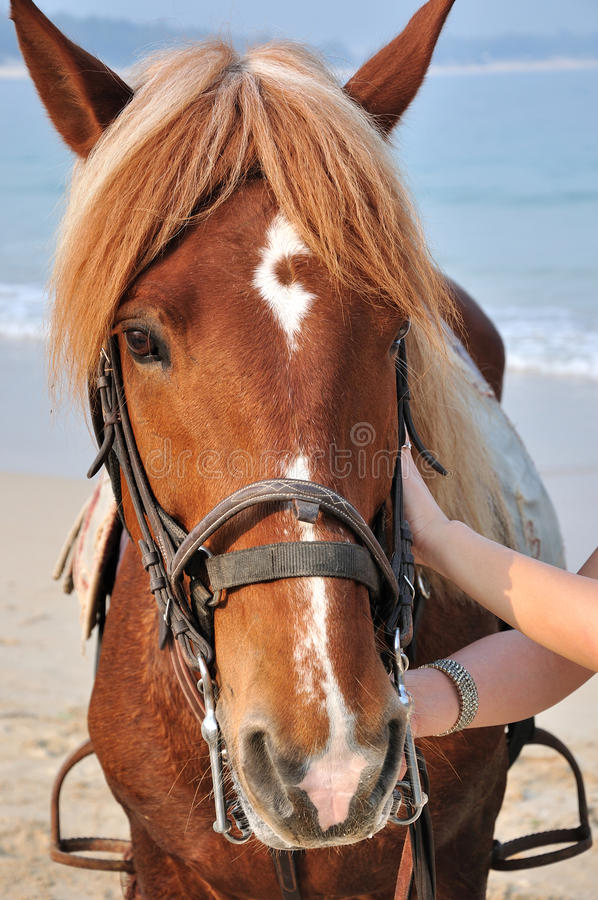 Download Horse on beach stock photo. Image of sensation, harness - 19279910