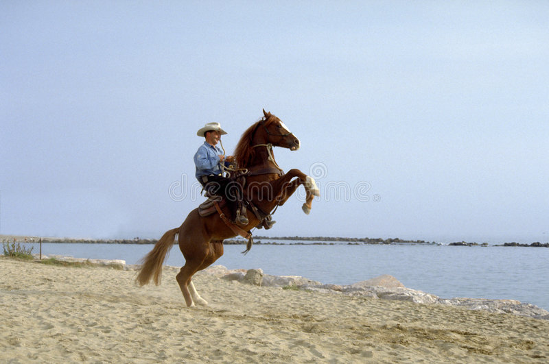 Horse in beach stock images