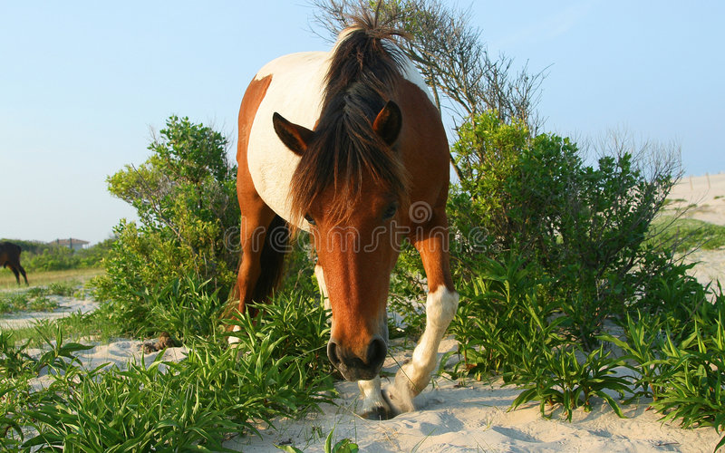 Horse On Beach stock images