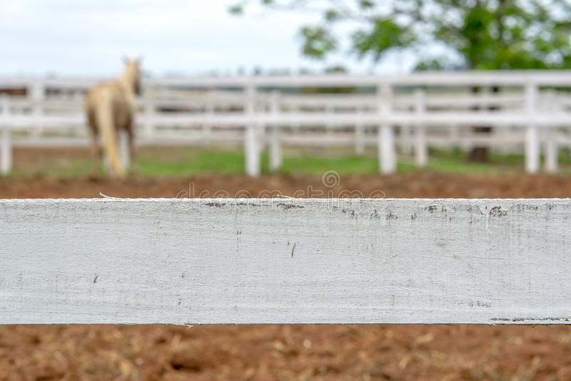 Horse behind the fence royalty free stock photography