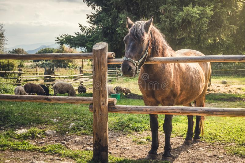Horse behind a Fence royalty free stock image