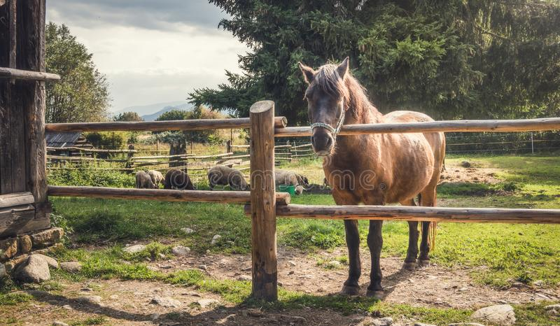 Horse behind a Fence stock photos