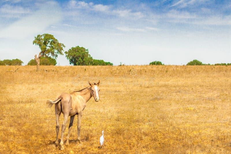 Horse with bird royalty free stock photo