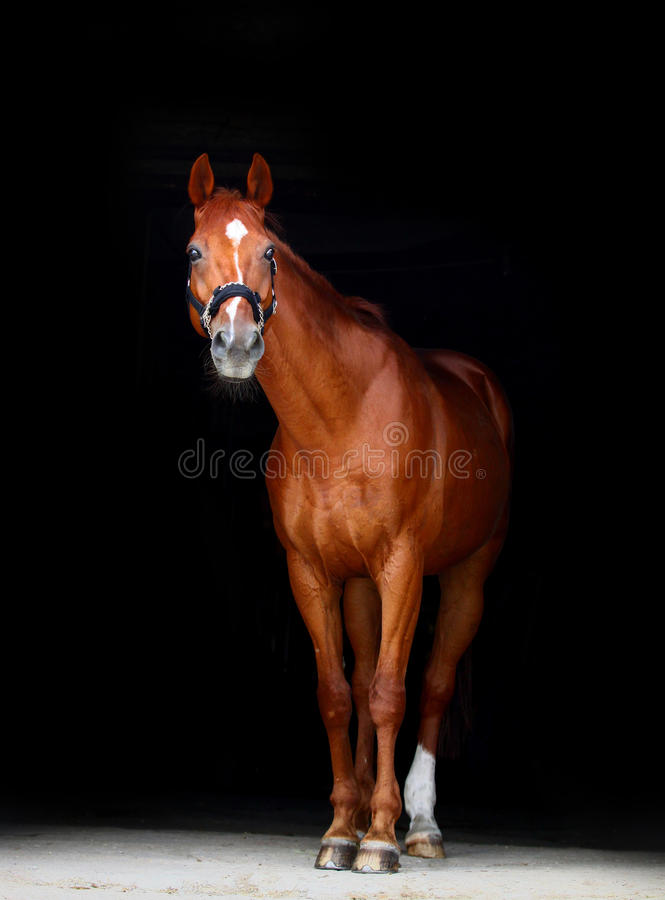 Horse on black stock photos