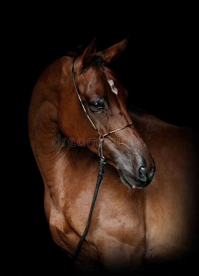 Horse on black royalty free stock photography