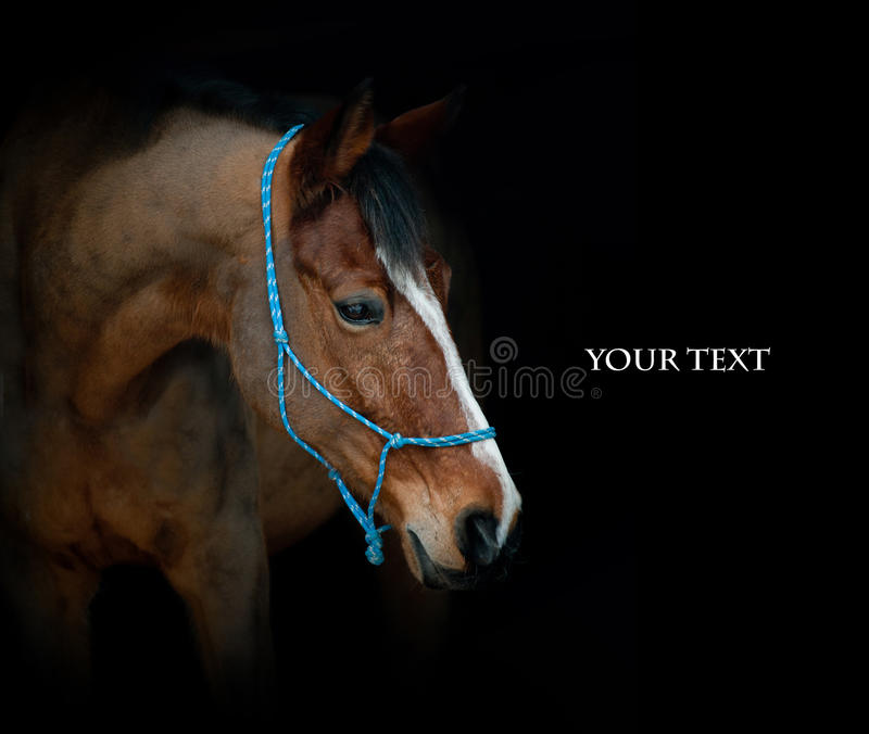 Download Horse on black stock photo. Image of farm, mammal, equine - 41373340