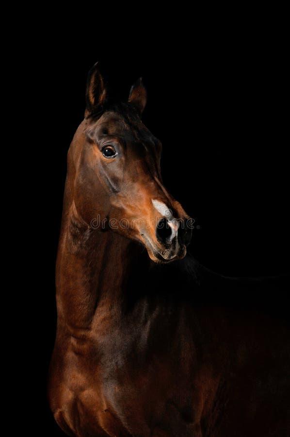 Horse on the black background stock photo