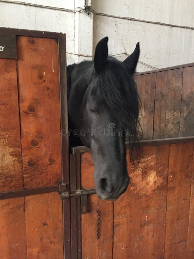 Download Horse stock image. Image of barn, horse, black, nobody - 83710505