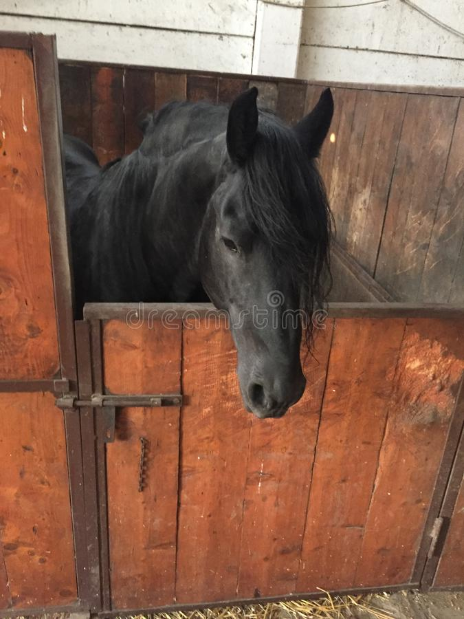 Download Horse stock photo. Image of horse, black, beauty, summer - 83710780
