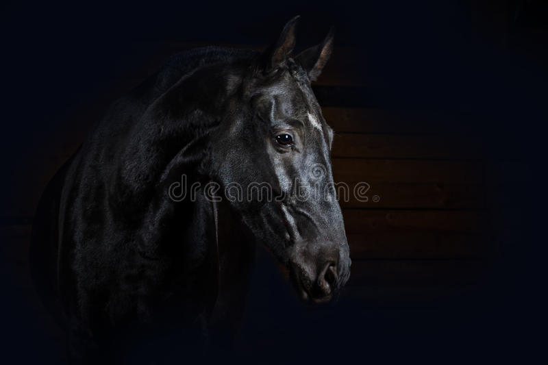 Horse on black stock photos