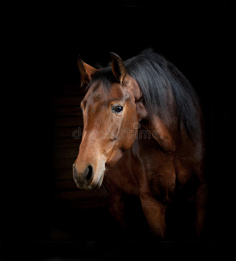 Horse on a black royalty free stock image