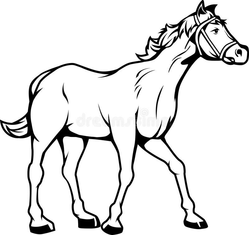 Horse Black And White Stock Vector Illustration Of Gallop 36117851