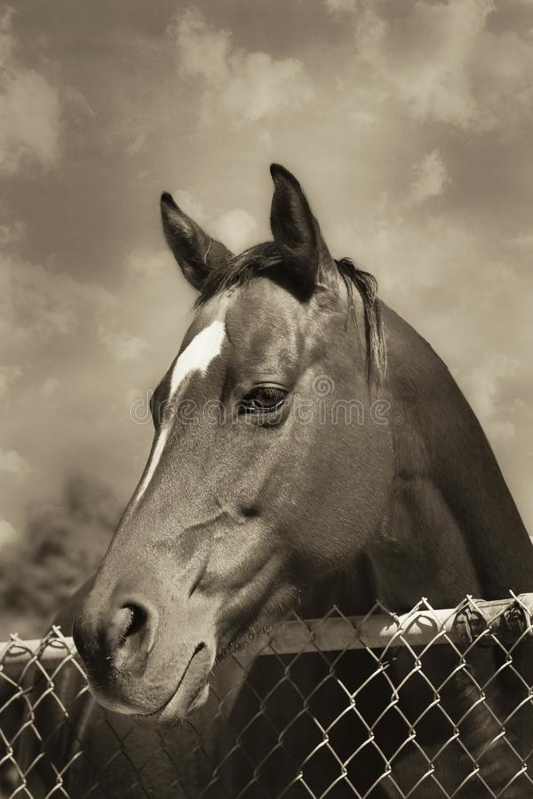 Close-up of Horse royalty free stock image