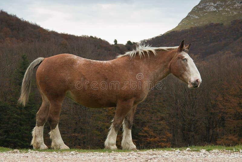 Horse with blue eyes stock photo